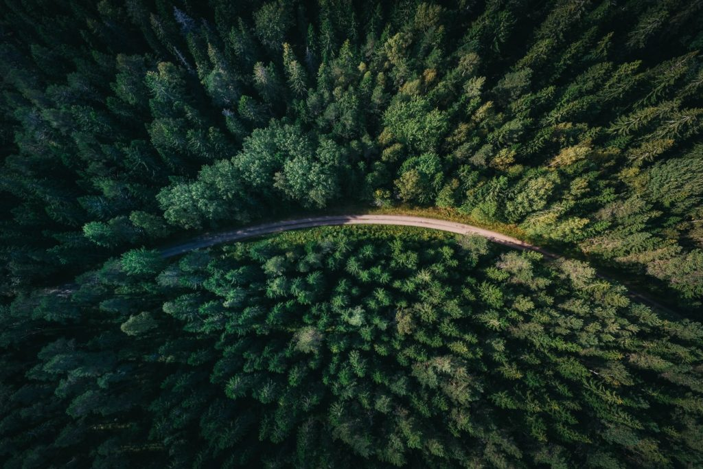 forest-geran-de-klerk-qzgN45hseN0-unsplash